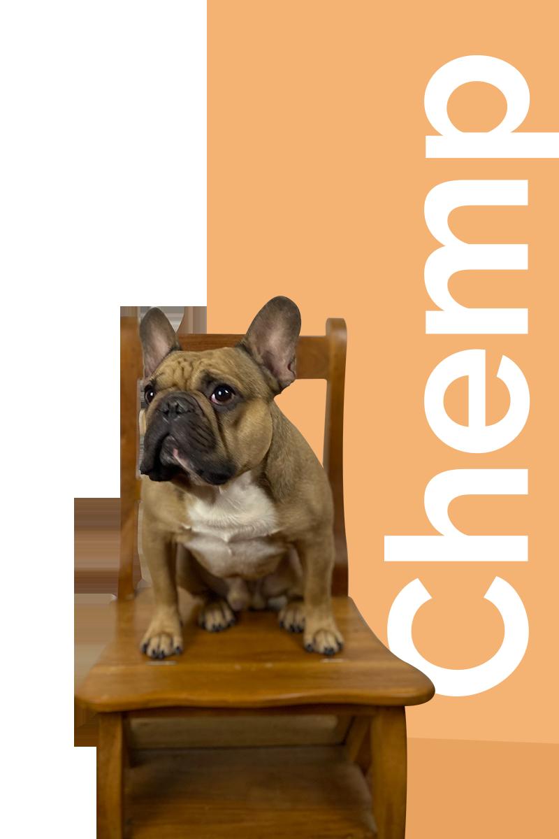 animaux CBD chien chemp bio