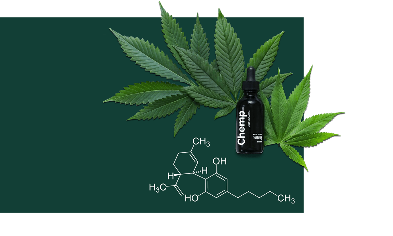 plante de chanvre bio CBD cannabidiol chemp