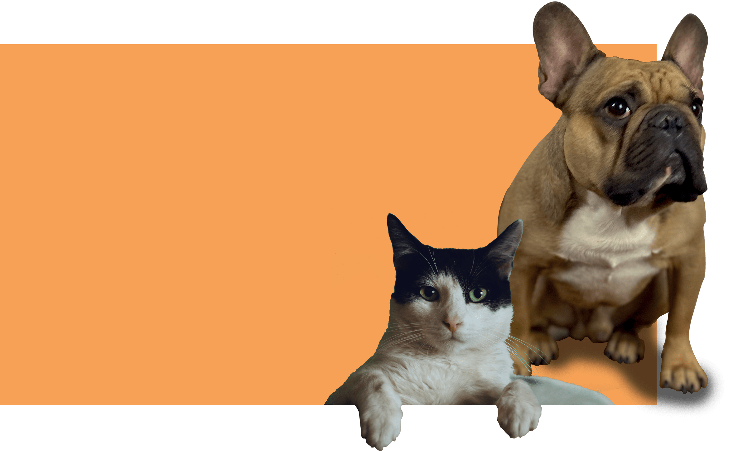 animaux chemp CBD biocare